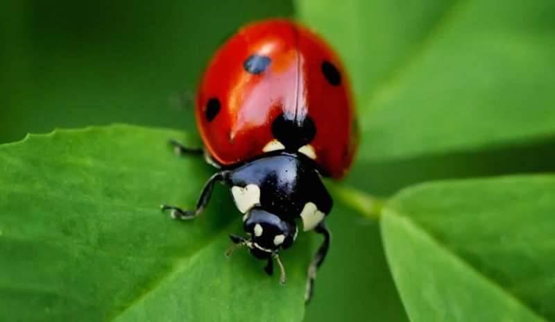 estinzione insetti