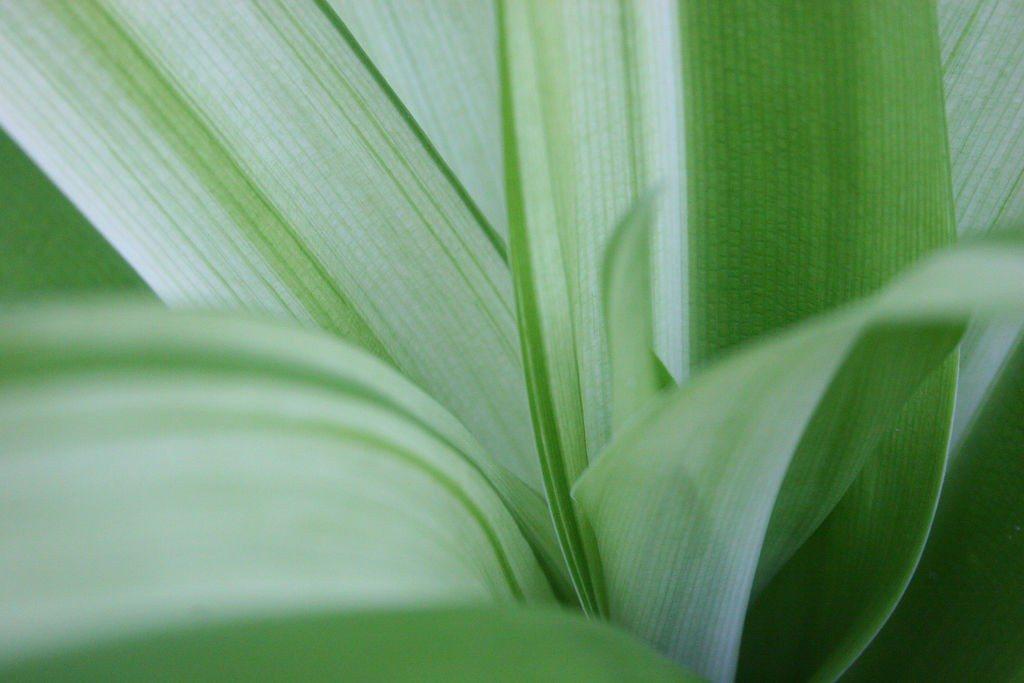piante pallide
