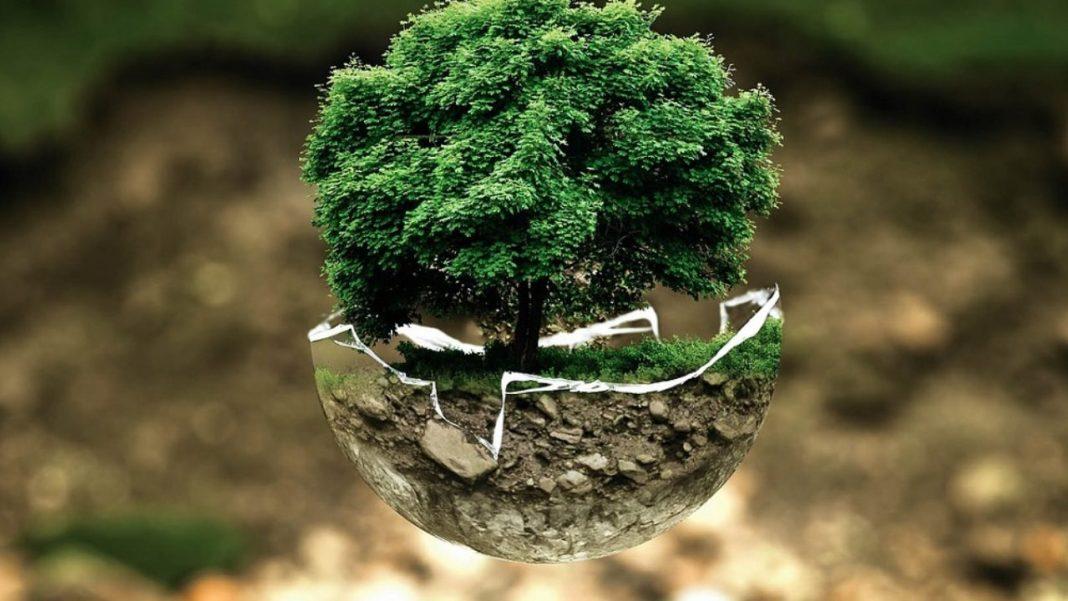 piante anidride carbonica