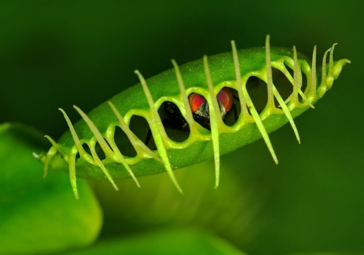 Comunicare con le piante