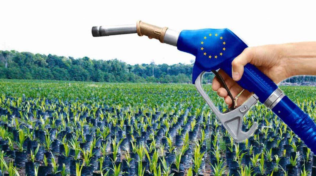 Biocarburati - Foto da Exportiamo